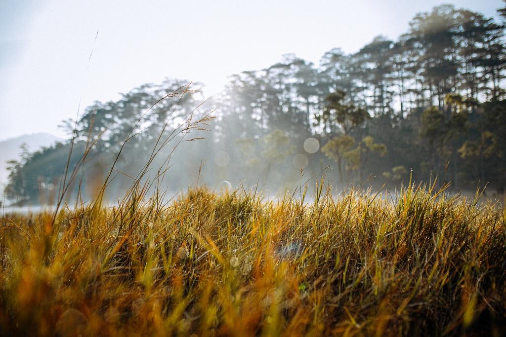 Hồ Tuyền Lâm huyền ảo trong sương sớm ngày xuân