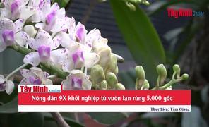 Nông dân 9X khởi nghiệp với vườn lan rừng 5.000 gốc