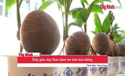 Thầy giáo dạy Toán đam mê làm dừa kiểng
