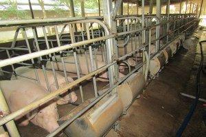 Chủ động phòng, chống dịch bệnh động vật trên địa bàn tỉnh