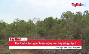 Tây Ninh: Tập trung cao độ phòng chống cháy rừng