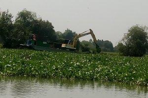 Sẽ tăng cường công tác trục vớt lục bình trên sông Vàm Cỏ Đông