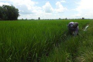 Ngành nông nghiệp Tây Ninh ứng phó trước tình hình dịch bệnh Covid-19