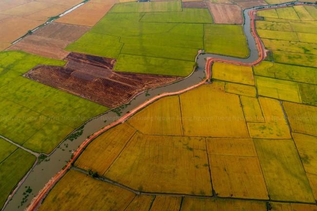 Cánh đồng lúa ở xã Thanh Điền, huyện Châu Thành và Gò Duối thuộc xã Long Thành Nam, Thị xã  Hòa Thành, tỉnh Tây Ninh.