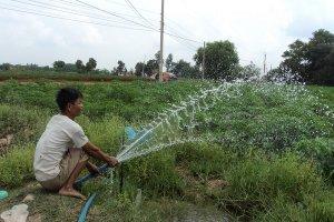Diện tích trồng mía, cao su giảm mạnh, diện tích trồng mì tăng