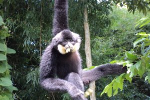 Nâng cao nhận thức cộng đồng về Vườn Quốc gia Lò Gò – Xa Mát - Vườn di sản ASEAN