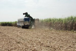 Triển khai đồng bộ các giải pháp để phát triển ngành mía đường