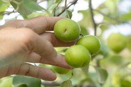 Nông nghiệp chuyển mình, nâng cao giá trị gia tăng