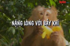 Nặng lòng với bầy khỉ