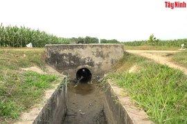 Nông dân gặp khó do thiếu nước tưới trên tuyến kênh nội đồng