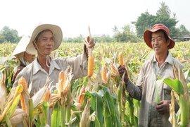 Thúc đẩy liên kết sản xuất và tiêu thụ sản phẩm nông nghiệp