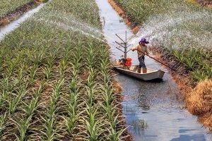 Tiếp tục tái cơ cấu lại ngành Nông nghiệp theo hướng nâng cao giá trị gia tăng