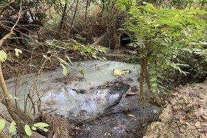 Giám sát tình hình xử lý nước thải của các cơ sở sản xuất, kinh doanh, dịch vụ trên địa bàn tỉnh Tây Ninh