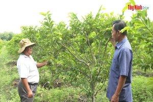 Phòng, chống dịch bệnh trên cây ăn trái đầu mùa mưa