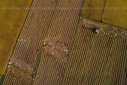 Một số quy định của pháp luật về đất đai liên quan đến việc chuyển nhượng, nhận tặng cho quyền sử dụng đất trồng lúa