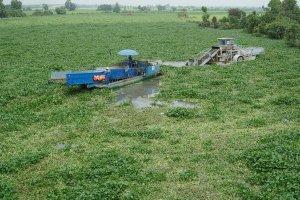 Cần quan tâm xử lý vấn nạn lục bình và ô nhiễm trên sông Vàm Cỏ Đông