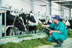 Khẩn trương triển khai các biện pháp kiểm soát phòng, chống bệnh Viêm da nổi cục trên trâu, bò