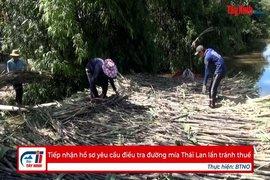 Tiếp nhận hồ sơ yêu cầu điều tra đường mía Thái Lan lẩn tránh thuế