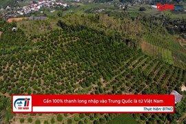 Gần 100% thanh long nhập vào Trung Quốc là từ Việt Nam