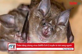 Thêm bằng chứng virus SARS-CoV-2 truyền từ dơi sang người