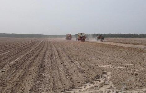 Xây dựng cánh đồng lớn- xu hướng phát triển cho ngành Mía đường