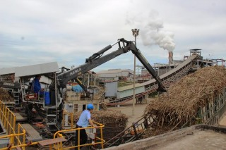 Tây Ninh: Dự kiến giảm sản lượng đường do ảnh hưởng thời tiết