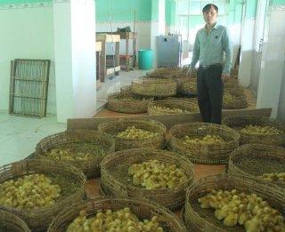 Chăn nuôi vịt theo hướng an toàn sinh học cho hiệu quả kinh tế cao