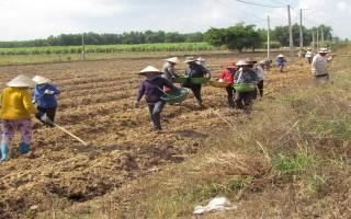 Năm 2016 diện tích gieo trồng của tỉnh vượt kế hoạch