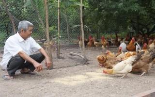 Hoà Thành: Tập huấn kỹ thuật chăn nuôi gà an toàn sinh học