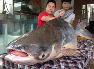 """""""Thủy quái"""" nặng hơn 1 tạ xuất hiện ở Hà Nội"""