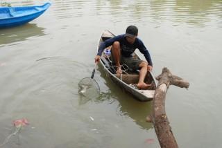 Cá nổi trắng rạch Tây Ninh