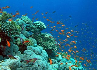 Bài mẫu viết thư lần UPU 46 năm 2017: Cùng chung tay bảo tồn tài nguyên biển