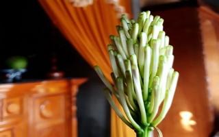 Cây trường sinh bất ngờ bung nở hoa lạ trong ngày đầu năm