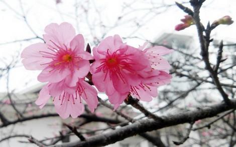 Dưỡng da với hoa xuân