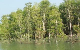Nước hồ dâng cao, nông dân trồng mì thất thu