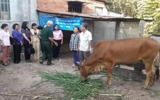 Hội LHPN thị trấn Dương Minh Châu: Hỗ trợ bò giống cho hội viên nghèo