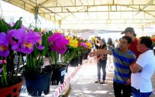Mãn nhãn với hoa lan