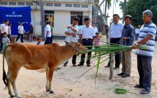 Trao bò cho hộ nghèo