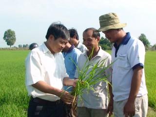 Châu Thành: Rầy nâu gây hại gần 2 ngàn ha lúa