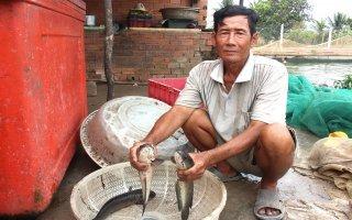 Nhiều nông dân ở xã Phước Minh: Điêu đứng vì giá cá giảm mạnh