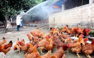 Chưa phát hiện vi rút cúm A/H7N9 tại Việt Nam
