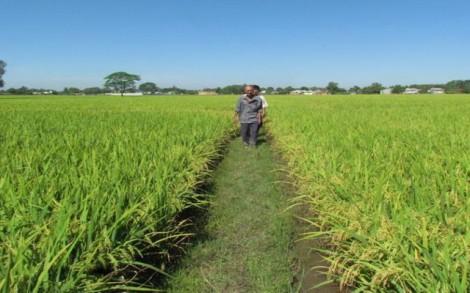 Trảng Bàng: Phấn đấu đến năm 2025 có 3.260 ha đất nông nghiệp tham gia cánh đồng lớn