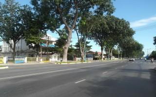 TP.Tây Ninh: Chuẩn bị thanh lý hàng xà cừ trên đường 30.4