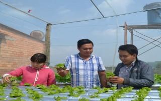Hiệu quả mô hình trồng rau thuỷ canh hồi lưu