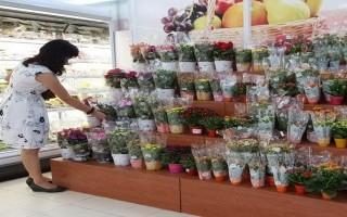 Thông tin giá cả thị trường các chợ, siêu thị