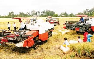 Người Việt mua gạo giá cao hơn xuất khẩu
