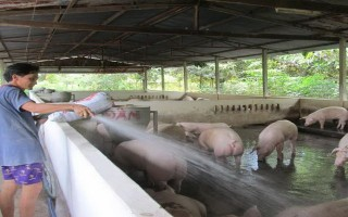 Triển khai xây dựng cơ sở, vùng an toàn dịch bệnh trong chăn nuôi