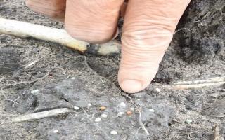 Nông dân nghi ngờ phân bón kém chất lượng