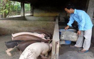 Chuyển dịch từ chăn nuôi nhỏ lẻ sang quy mô trang trại, đảm bảo an toàn sinh học