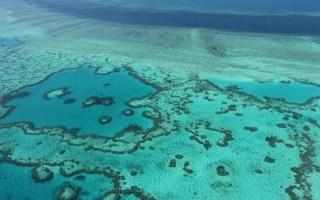 Hy vọng mới giải cứu rạn san hô lớn nhất thế giới Great Barrier